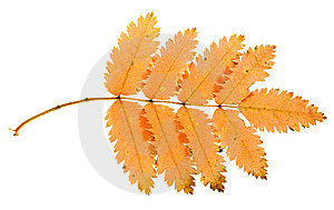 Autumn Leaf Royalty Free Stock Image - Image: 6914276