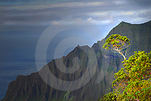 Tree Growing On A Mountain On The Napali Coast Royalty Free Stock Image - Image: 6918046
