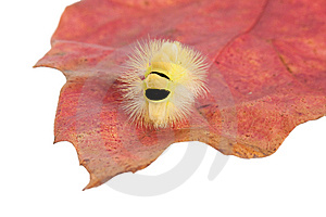Caterpillar Stock Image - Image: 6924701