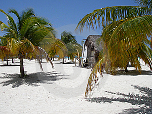 Caribbean Beach, Palms, Surf Royalty Free Stock Images - Image: 6928599