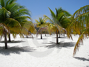 Caribbean Beach Paradise Royalty Free Stock Photography - Image: 6928607