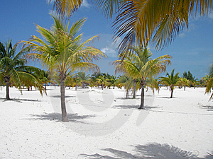 Paume Forest Beach Paradise Photographie stock libre de droits - Image: 6928917