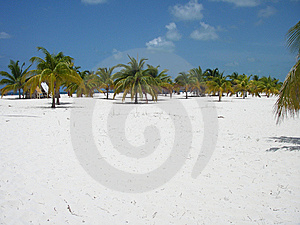 Palm Forest Beach Paradise 2 Stock Images - Image: 6928924