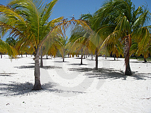 Paradis De Palm Beach Images libres de droits - Image: 6928929