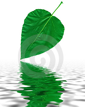 Green Leaf With Reflection In Water Stock Photos - Image: 6932523