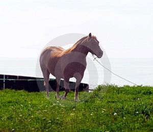 Hästen profilerar Fotografering för Bildbyråer