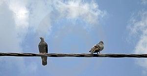 Sitting Birds (1) Royalty Free Stock Image