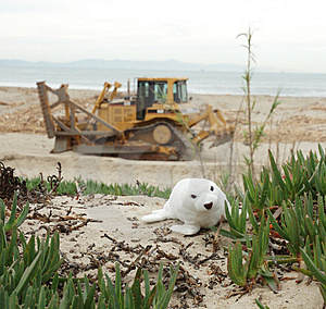 Seal And Tractor Stock Photo