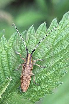 Beetle Free Stock Image