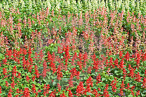 Flowerbed Free Stock Photography