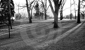 Δέντρα σε ένα πάρκο Στοκ φωτογραφίες με δικαίωμα ελεύθερης χρήσης
