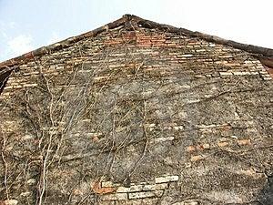 Alte Scheunenwand mit Rebe Stockfoto