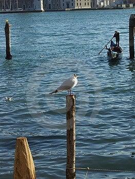 Venetiaanse zeemeeuw Royalty-vrije Stock Fotografie