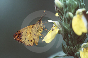 Butterfly Free Stock Photo