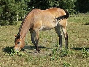 Άλογο 4 Στοκ Φωτογραφία
