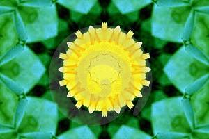 Yellow Flower Free Stock Photo