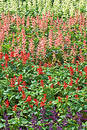 Colorful Flowerbed 2 Free Stock Image