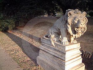 Frozen Lion Stock Image - Image: 706661