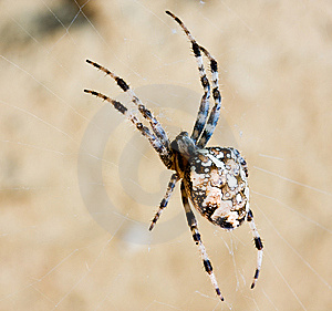 Spider Stock Image - Image: 7010071