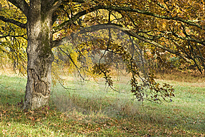 Smiling Tree In The Fall Royalty Free Stock Photography - Image: 7012107
