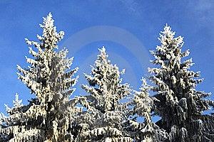 Winter Trees Stock Photos - Image: 7012743