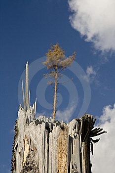 Broken Tree Stock Photography - Image: 7016412