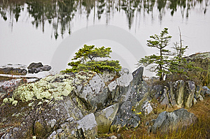 Marsh Ecosytem With Mossy Rocks And Trees Royalty Free Stock Image - Image: 7016906