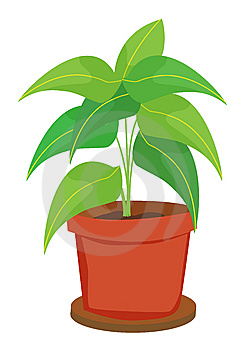 Pot Plant Stock Photography - Image: 7017242