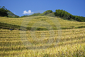 Hills And Rice Terraces Royalty Free Stock Image - Image: 7017446