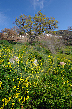 Spring Royalty Free Stock Photo - Image: 7020635