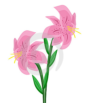 Lily Illustration Royalty Free Stock Photography - Image: 7022027
