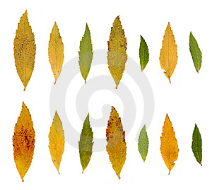 Leafs, Autumn Colors Royalty Free Stock Photos - Image: 7023538