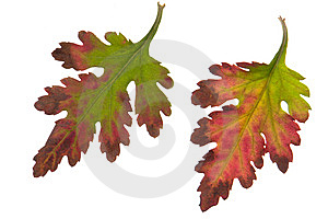 Leaf Royalty Free Stock Photo - Image: 7030675