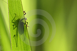 Shadow Of An Insect Royalty Free Stock Photo - Image: 7031465