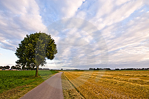 Country Road With Tree In A  Farmlandscape Stock Image - Image: 7033191