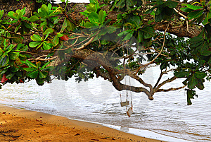 Two Swings On A Tree In Kauai Hawaii Royalty Free Stock Photo - Image: 7033285