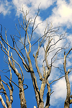 The Slovak Republic 2008 - Tree And Blue Sky Royalty Free Stock Photo - Image: 7035805