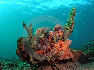 Coral Reef Royalty Free Stock Image - Image: 7039486