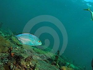 Reef Fish Stock Image - Image: 7039771