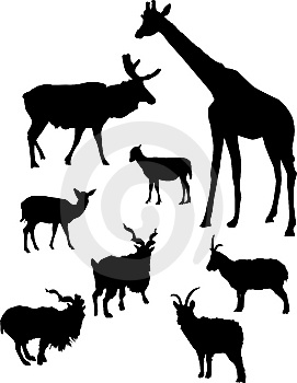 Horned Animals Outline Royalty Free Stock Photography - Image: 7046077