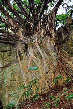 Root Stock Photo - Image: 7053930