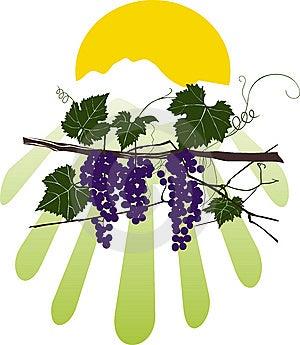 Vine Color Stock Images - Image: 7055404