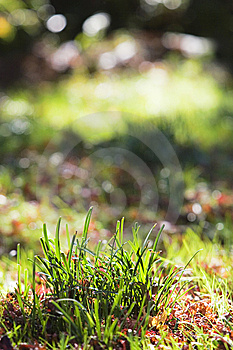 Grass Royalty Free Stock Photo - Image: 7062075