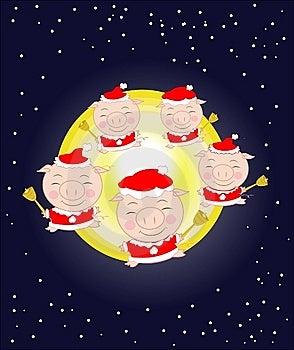 Christmas Pigs Stock Image - Image: 7062951