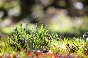 Grass Stock Photos - Image: 7065153