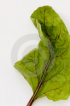 Leaf Of Beetroot Royalty Free Stock Photos - Image: 7066918