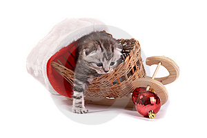 Kitten Plays On A White Background Royalty Free Stock Photos - Image: 7067128