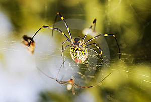 Spider Royalty Free Stock Photos - Image: 7067548