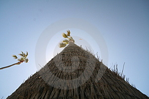 High-angle Shot Of A Palm Tree Royalty Free Stock Image - Image: 710766