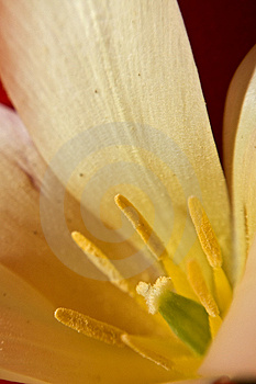 Flower Petal Royalty Free Stock Photo - Image: 721445
